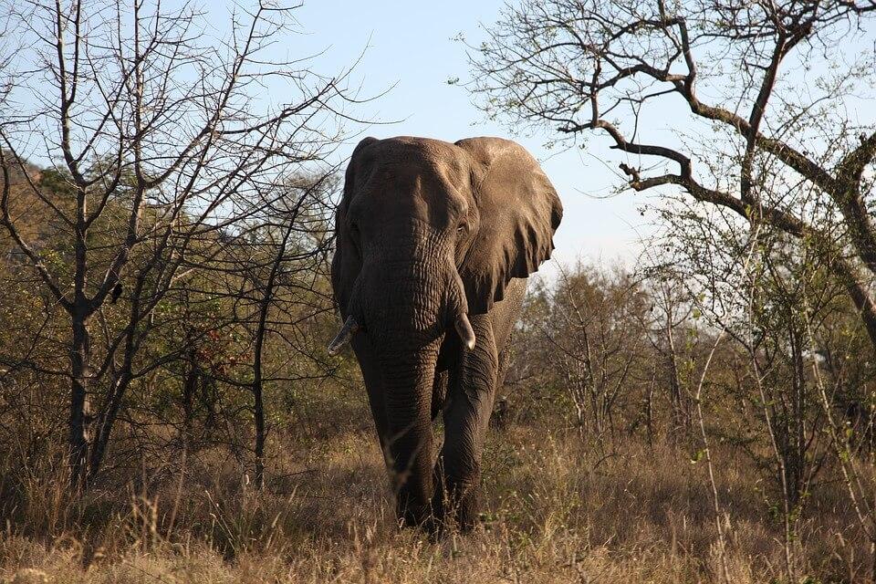 3 pays pour voir des animaux en liberté hors de l'Afrique