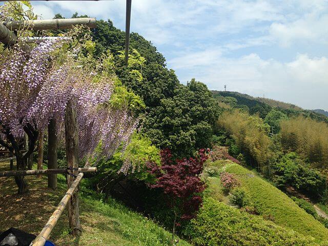 Visite du Japon