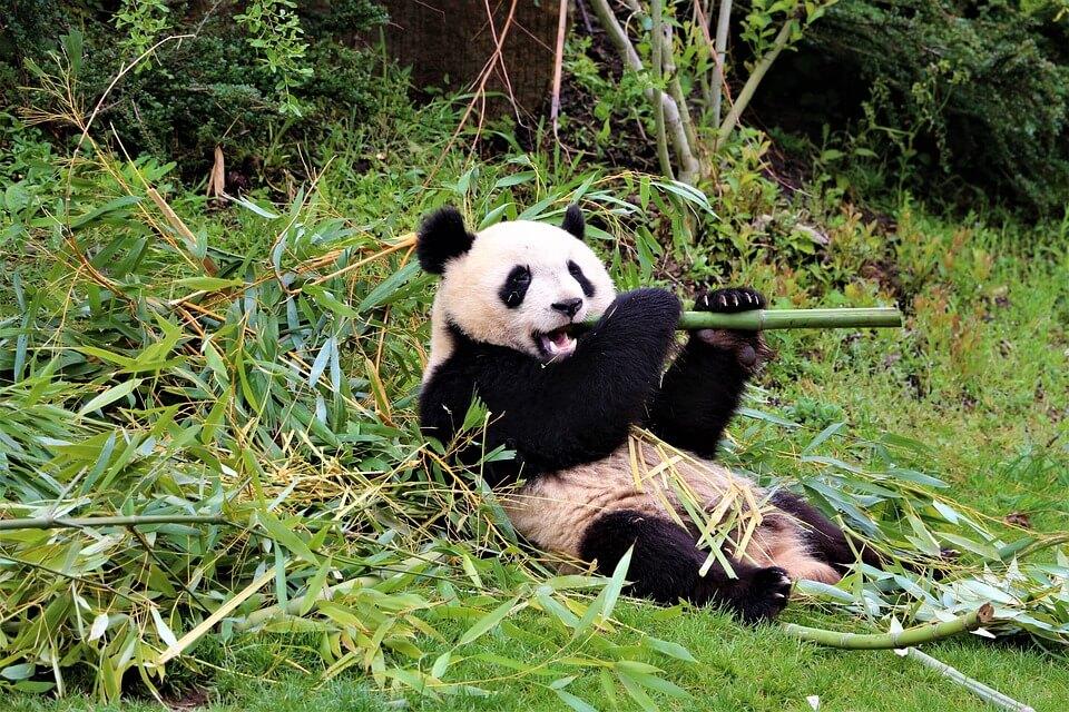 Le zoo de Beauval : pourquoi s'y rendre?