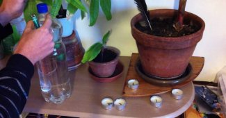 5 erreurs à éviter quand vous arrosez vos plantes en pot